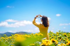 Cheerful multiracial Asian woman hands forming a heart shape on sunflowers field. stock photos