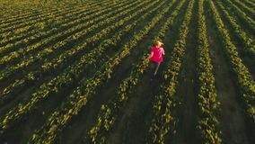 Happy carefree young girl running among green strawberry bushes, view from drone. Happy and carefree young girl is running at the field among strawberry bushes stock video