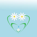 Happy,caring family of daisies. Happy,caring family of daisies in the shape of a heart Stock Photography