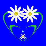 Happy,caring family of daisies. Happy,caring family of daisies in the shape of a heart Stock Images