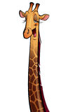 Happy giraffe Stock Photo