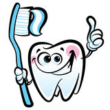 Happy cartoon molar tooth character holding dental toothbrush wi. Healthy cute cartoon tooth character making a thumb up gesture while smiling happily and Royalty Free Stock Images