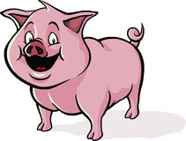 Happy cartoon pig. A happy, smiling cartoon pig Royalty Free Stock Images