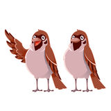 Happy cartoon  Sparrows Stock Images