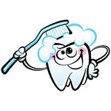 Happy cartoon white molar tooth character washing with dental to Royalty Free Stock Image