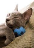 Happy cat stock images