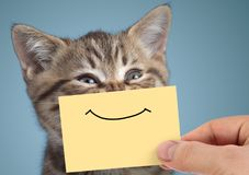 Happy cat closeup portrait with funny smile on cardboard. Happy young cat closeup portrait with funny smile on cardboard on blue background stock photography