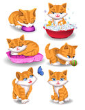 Happy cat doing different activities Royalty Free Stock Images