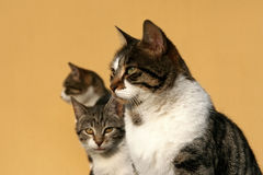 The happy cat family stock images
