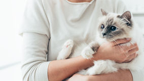 Happy cat in her owner's arms stock image
