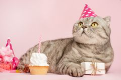 Happy cat or kitty in a festive cap and cupcake celebrates birthday stock image