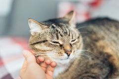 Happy cat is pleased with hand stroking royalty free stock images