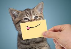 Happy cat portrait with funny smile and tongue stock images