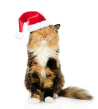 Happy cat in red christmas hat. isolated on white background Royalty Free Stock Photo