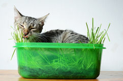 Happy cat. Relaxing in   grass Royalty Free Stock Photography