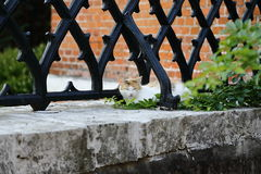 Happy cat resting near a fence on the parapet Stock Photos