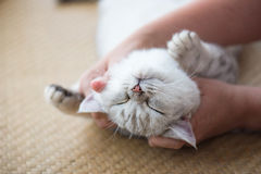 Happy cat sleeping Royalty Free Stock Image