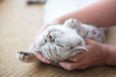 Happy cat sleeping Royalty Free Stock Images