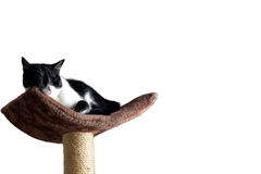 Happy cat taking rest on a tower Stock Images