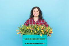 Happy caucasian female florist laughing and holding big box of tulips on blue background royalty free stock photography