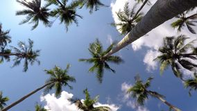 Happy Cheerful Vacation and Travel in Tropical. Exotic Destination - Time Lapse of Coconut Palm Trees against Blue Sky. HD, 1920x1080 stock video
