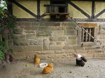 Happy chickens in country-style setting Stock Images