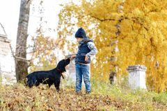 Happy child with a black Russian Spaniel in the park. Bright autumn day. Trees with yellow foliage. Warm october stock images