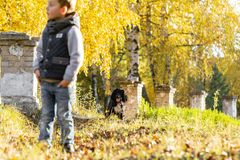 Happy child with a black Russian Spaniel in the park. Bright autumn day. Trees with yellow foliage. Warm october royalty free stock photography
