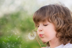 Happy child blowing dandelion Stock Photos