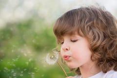 Happy child blowing dandelion Stock Photos