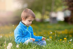Happy child blowing dandelion outdoors in spring park Stock Photos