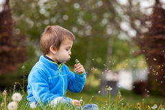 Happy child blowing dandelion outdoors in spring park Stock Photography