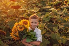 Happy child with bouquet of beautiful sunflowers in summer sunflower field on sunset. Mother day. Concept stock photos