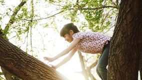Happy child climbed on the trees. The girl is sitting on a tree branch and smiling. Little kid is playing in the park stock video footage