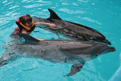 Happy child and dolphins in blue water. Dolphin Assisted Therapy.  royalty free stock images