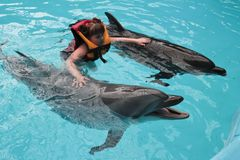 Happy child and dolphins in blue water. Dolphin Assisted Therapy.  royalty free stock image