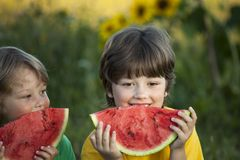 Happy child eating watermelon in garden. Two boys with fruit in park royalty free stock image