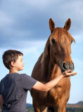 Happy child feeding a hungry and honorable horse Stock Photos