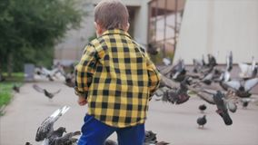 Happy child feeds bread to birds, Pigeons fly in the background, a little boy runs to him in the air. Happy family. Happy child runs after birds, pigeons fly in stock footage