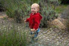 Happy child in garden stock images