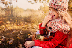 Happy child girl in knitted scarf and sweater with basket on autumn walk in forest eating apples Stock Images