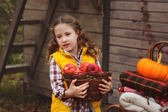 Happy child girl picking fresh apples on the farm. Country living concept Stock Images