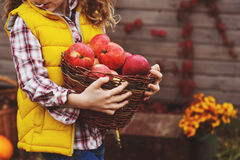 Happy child girl picking fresh apples on the farm. Country living concept Royalty Free Stock Images