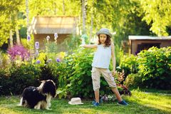 happy child girl playing with her spaniel dog and throwing ball Royalty Free Stock Image