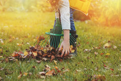 Happy child girl playing little gardener in autumn and picking leaves into basket Stock Image