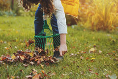 Happy child girl playing little gardener in autumn and picking leaves into basket Royalty Free Stock Photography