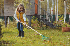 Happy child girl playing little gardener in autumn and picking leaves into basket. Seasonal garden work Stock Images
