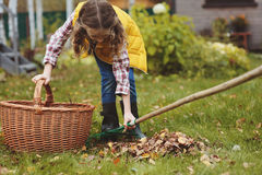 Happy child girl playing little gardener in autumn and picking leaves into basket. Seasonal garden work Stock Photos