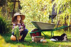 Happy child girl with spaniel dog playing little farmer in autumn garden and picking vegetable harvest. Growing fresh carrots, zuccini and pumpkins Royalty Free Stock Image