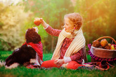 Happy child girl training her dog and giving him apple in sunny autumn garden. Happy child girl in white knitted scarf training her cavalier king charles spaniel Royalty Free Stock Photo
